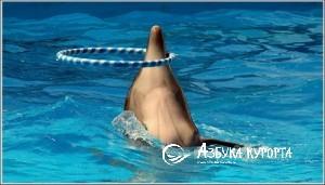 Дельфинарий Архипо Осиповка